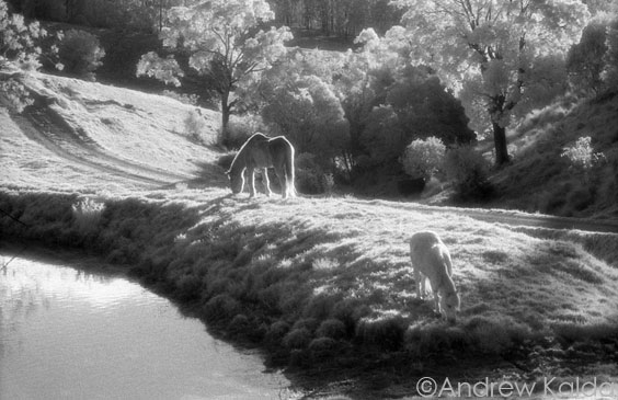 Hunter Valley Horses