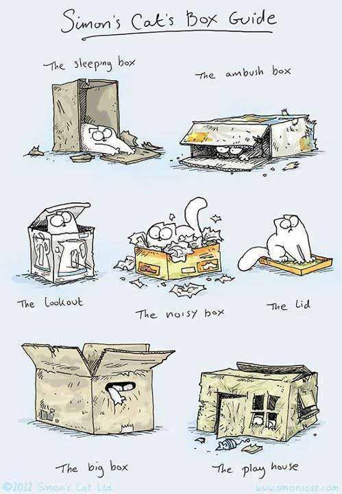Cat's Box Guide
