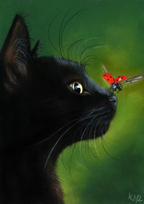 Black Cat and Butterfly