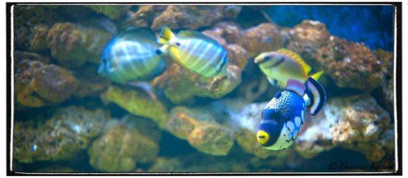 Zinc Fish